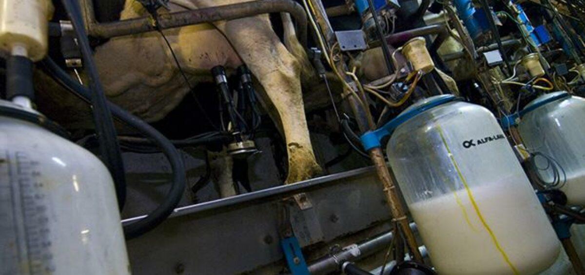 production lait hausse cniel